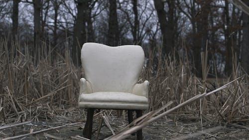 Základová fotografie zdarma na téma les, mrtvý, tráva, židle