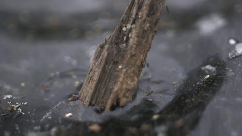 Základová fotografie zdarma na téma hloubka ostrosti, led, makro, mrtvý strom