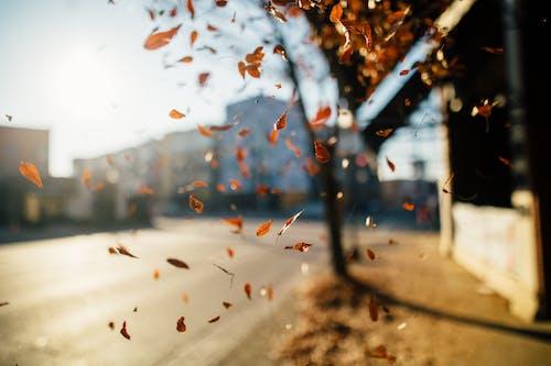 Kostnadsfri bild av falla, gata, gryning, landskap