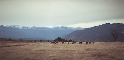 Immagine gratuita di bel paesaggio, blooddrainerphotography, bulgaria, campo