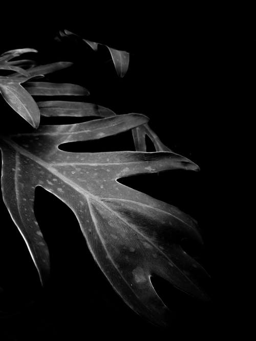 Black And White Photo Of Plant