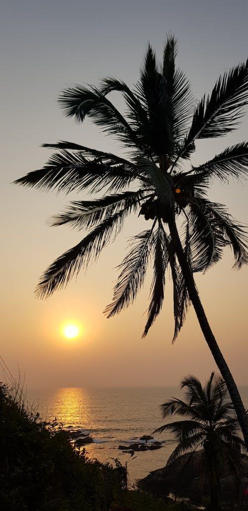 Foto d'estoc gratuïta de alba, cabana a la platja, coco, darrere