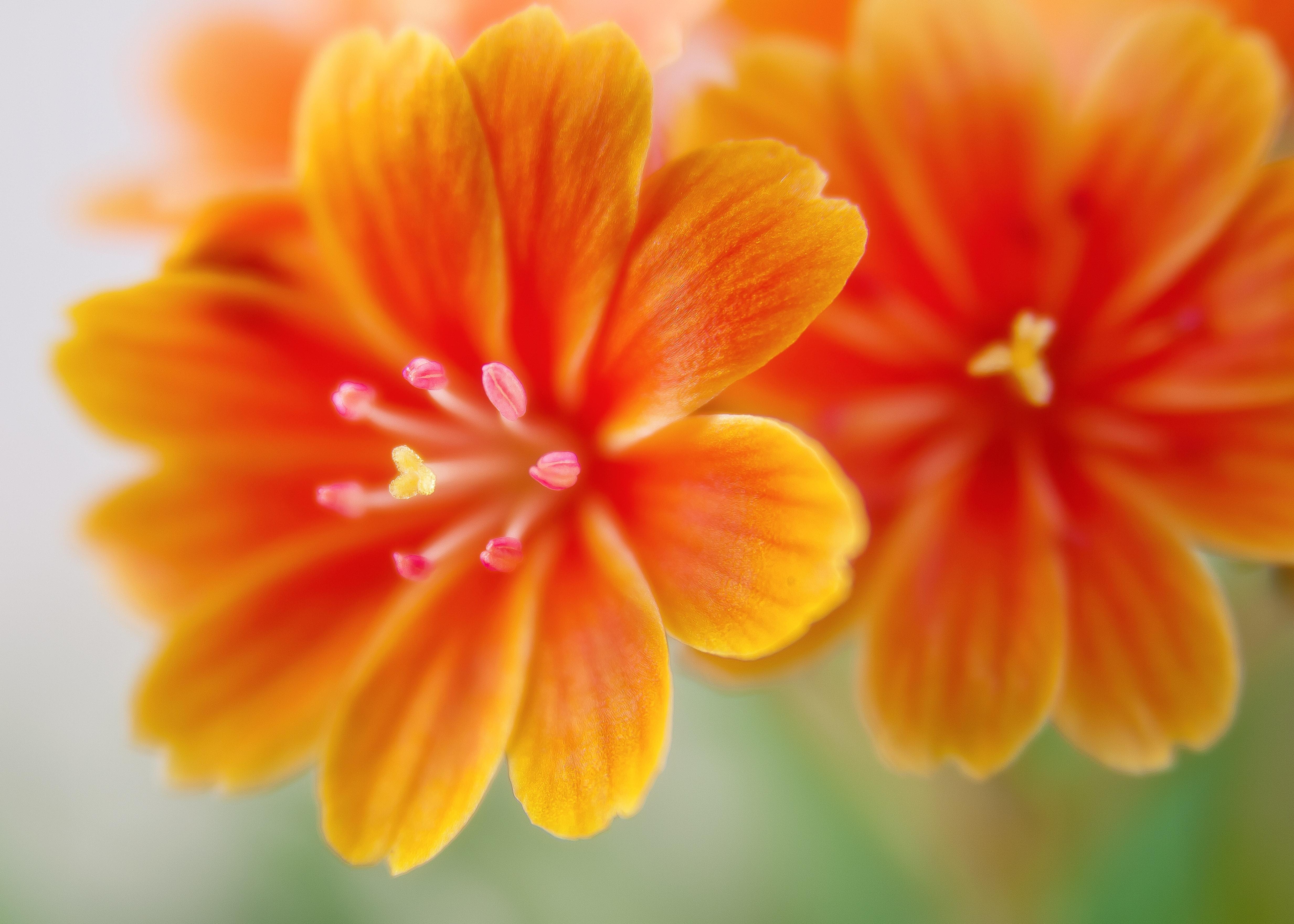 1000 Great Orange Flowers Photos Pexels Free Stock Photos