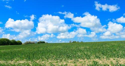 Immagine gratuita di alberi, azienda agricola, campo