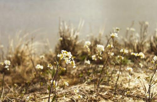 Immagine gratuita di bellissimo, bianco, estate