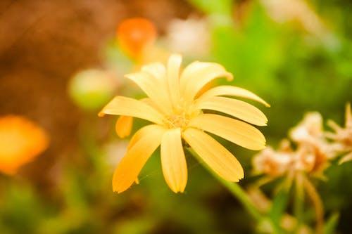 Immagine gratuita di bellissimo, estate, fiore