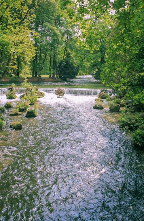 Immagine gratuita di acqua, alberi, bellissimo