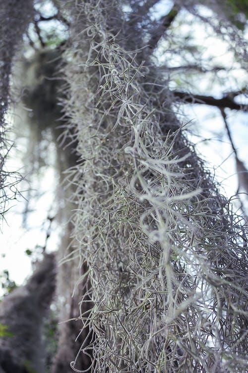 Immagine gratuita di albero, foresta, impianto