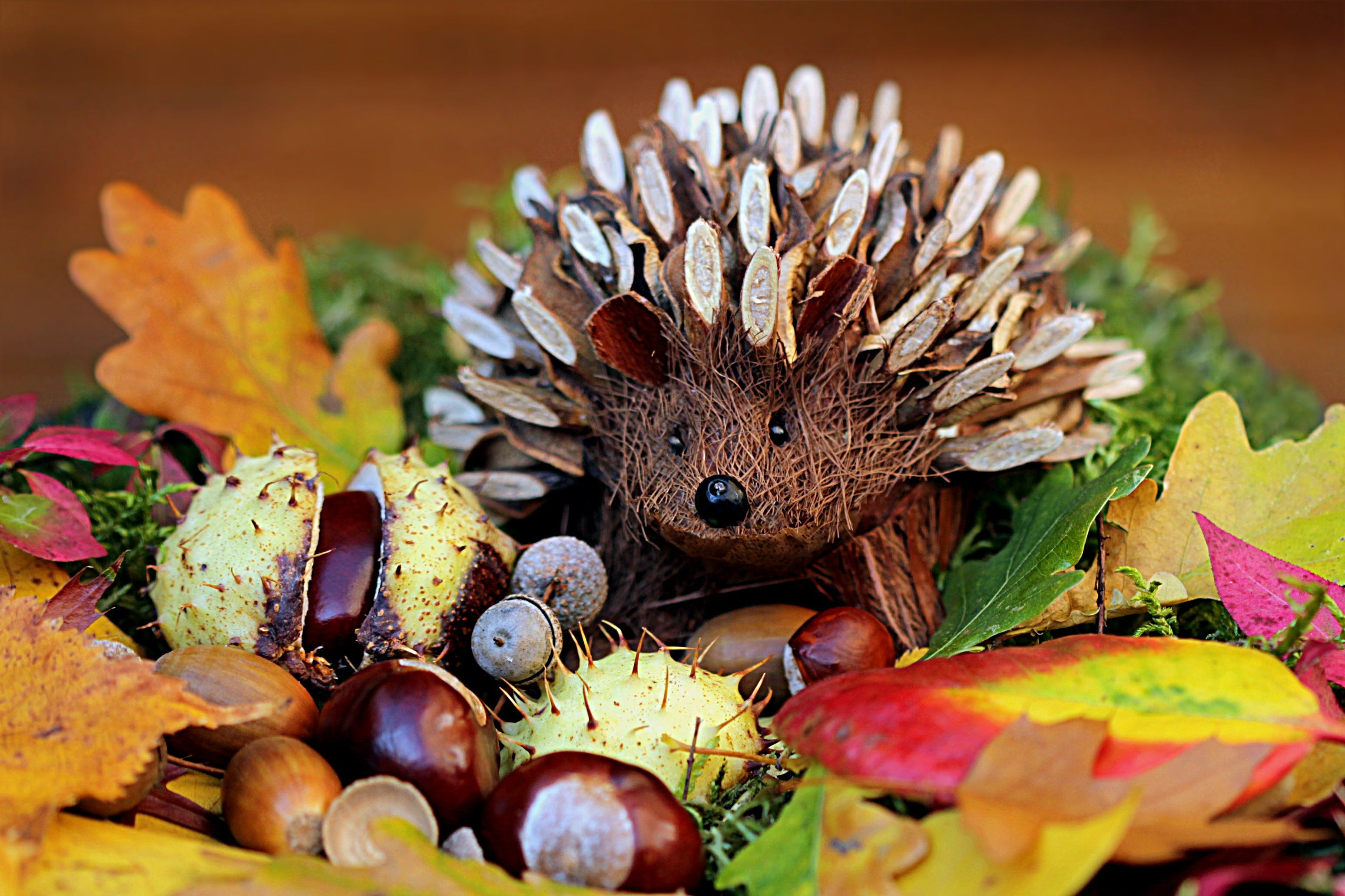 Brown Porcupine Artwork