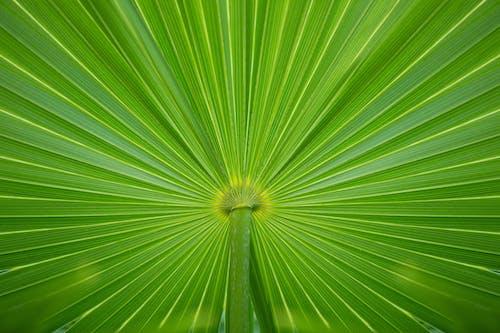 Gratis arkivbilde med abstrakt, abstrakt bakgrunn, blad, eviggrønn