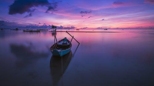 トロピカル, 光, 夜明け, 平和の無料の写真素材