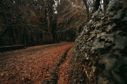 Fotobanka sbezplatnými fotkami na tému cesta, jeseň, leaces, lesy