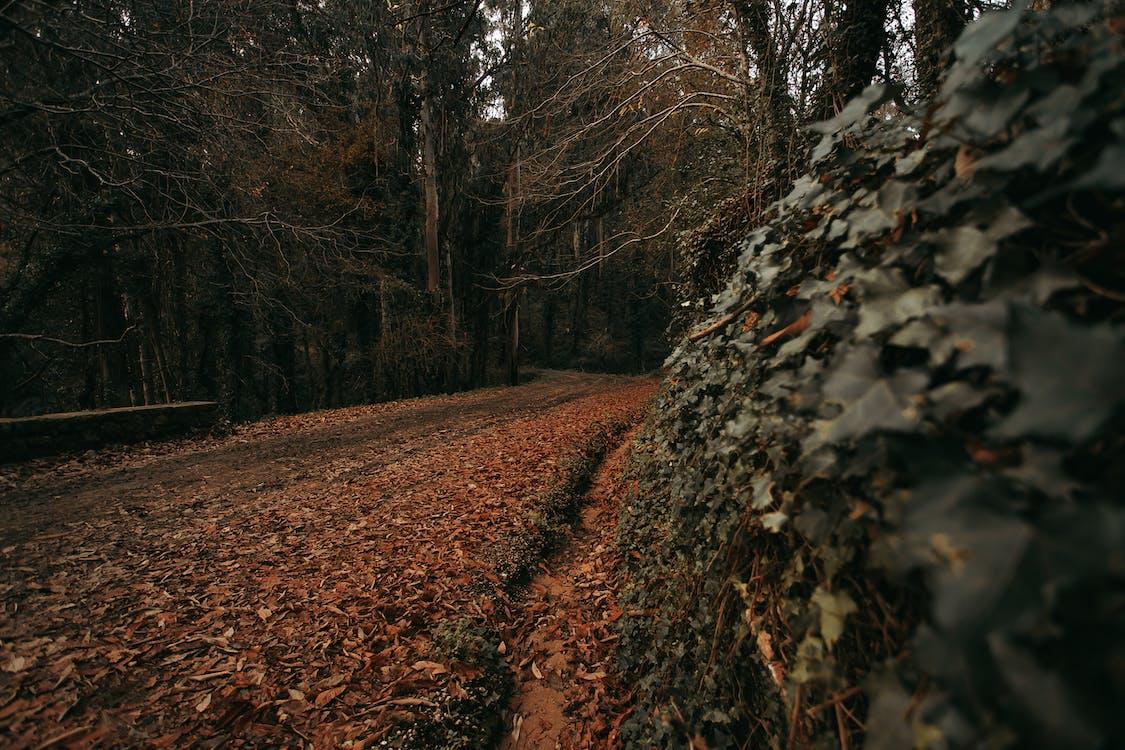 bomen, bossen, herfst