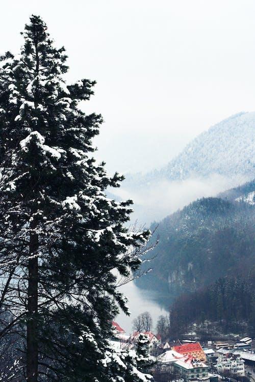 Kostnadsfri bild av barrträd, berg, by, dagsljus