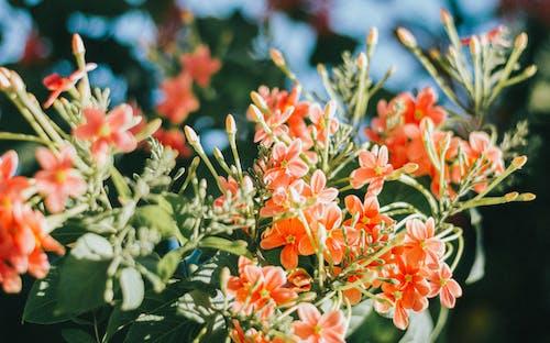 Gratis lagerfoto af 4k-baggrund, abstrakt, biologi, blomsterknop