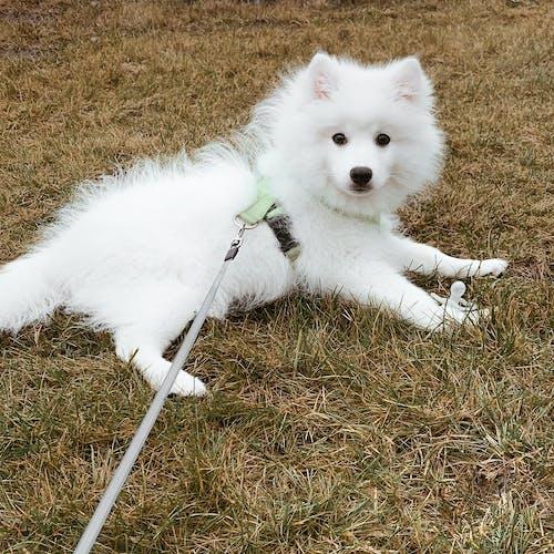 가을, 강아지, 개, 고무 젖꼭지의 무료 스톡 사진