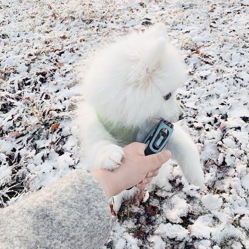 강아지, 개, 겨울, 귀여운의 무료 스톡 사진