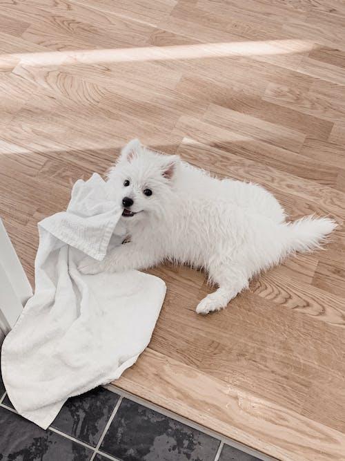 강아지, 개, 귀여운, 모피의 무료 스톡 사진