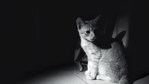 Free stock photo of black and white, cat, night photograph, night photography
