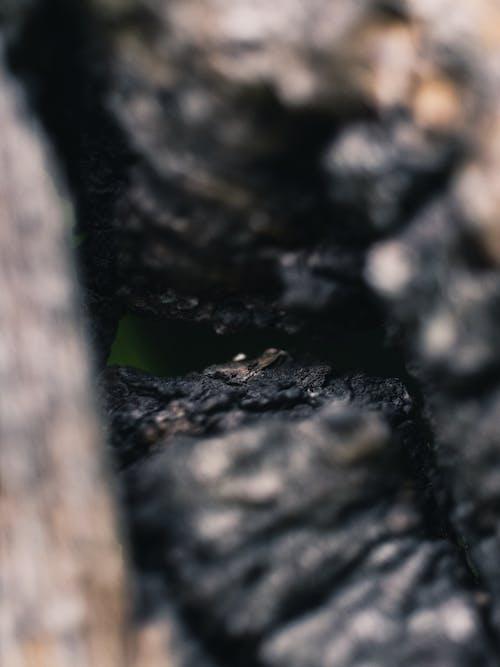 Immagine gratuita di astratto, carbonizzare, legno, vecchio
