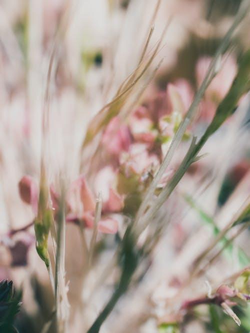 Immagine gratuita di astratto, erba, fiori, natura