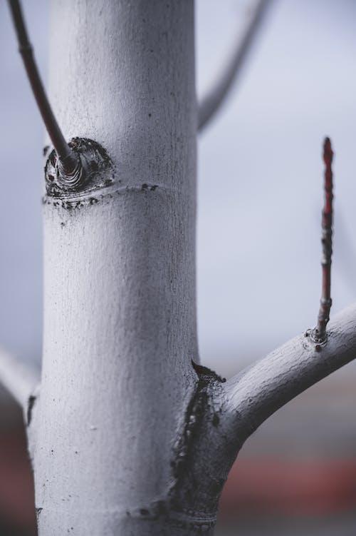 Бесплатное стоковое фото с ветви, дерево, древесная кора, лист