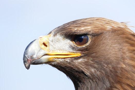 Kostenloses Stock Foto zu vogel, tier, adler, raubvogel