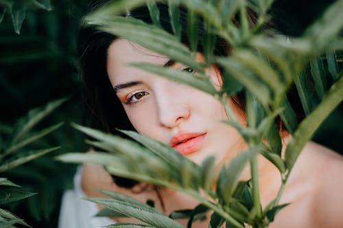 Woman Behind Green Leafed Plant