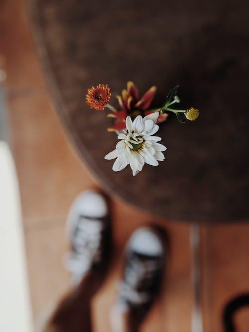 Weiße Gänseblümchenblume Auf Einem Tisch