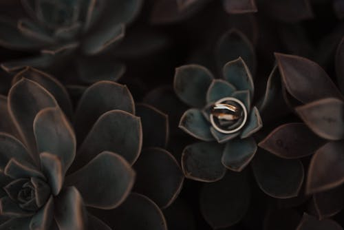 Free stock photo of artificial flowers, beautiful flowers, gold rings