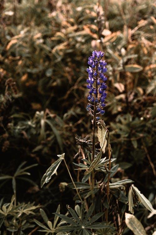 天性, 田, 盛开的鲜花, 紫羅蘭 的 免费素材照片