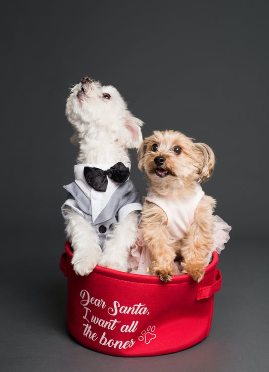 Dogs in Case
