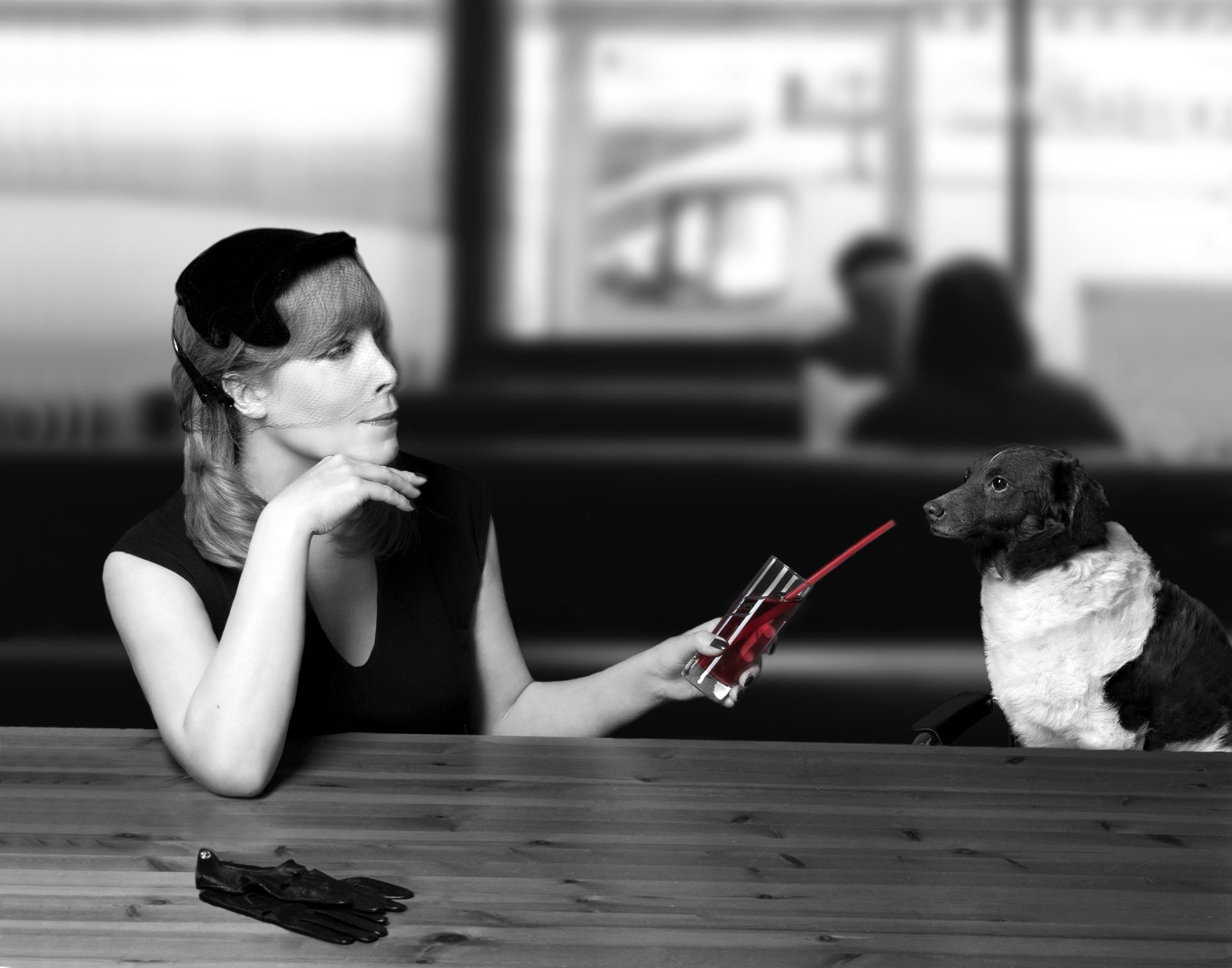 Foto d'estoc gratuïta de animal, blanc i negre, caucàsic, còctel