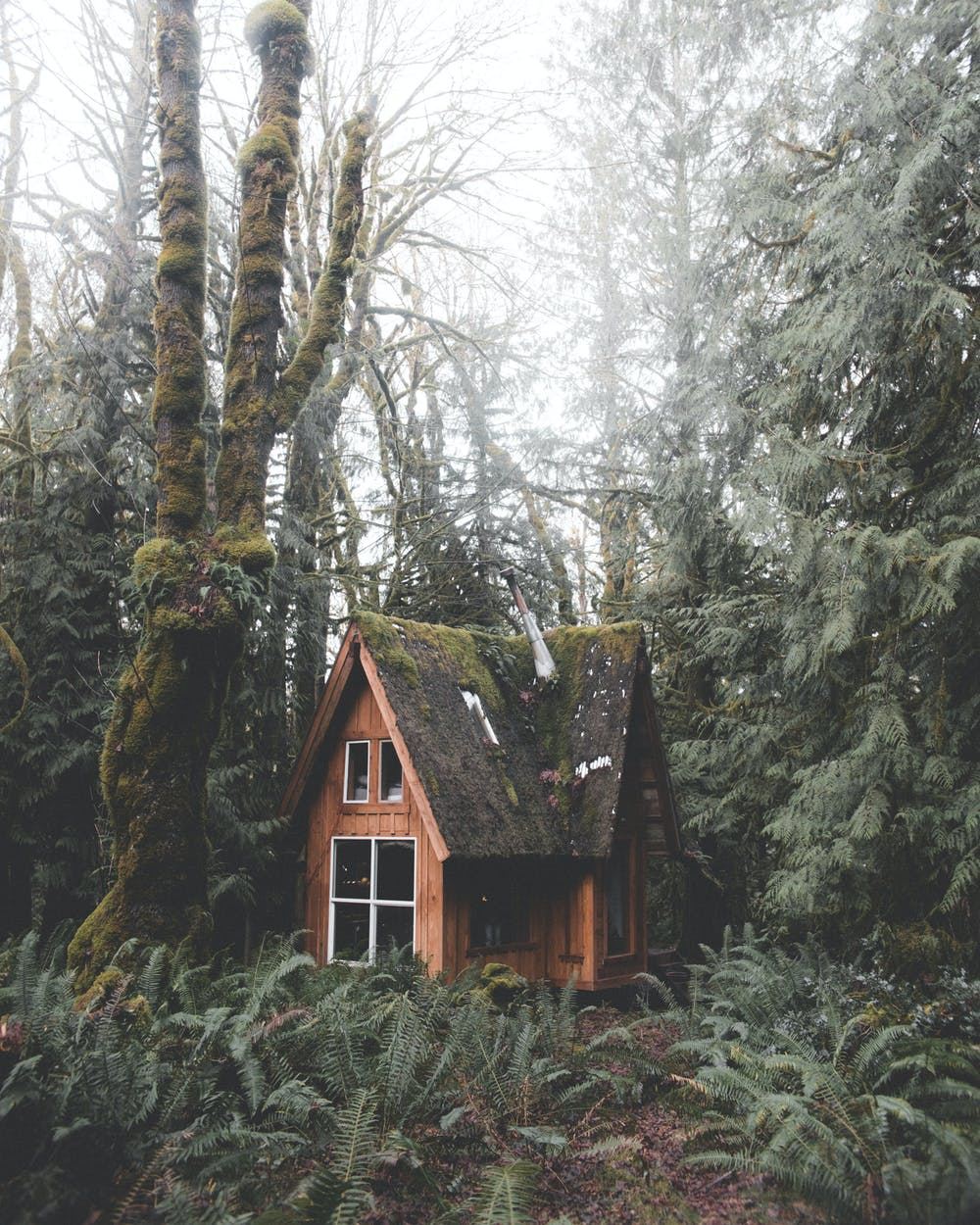 Wooden house in the forest. | Photo: Pexels