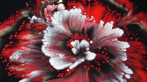 Photo Of Red And White Flower