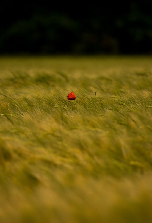 Green Grass with Red Flower