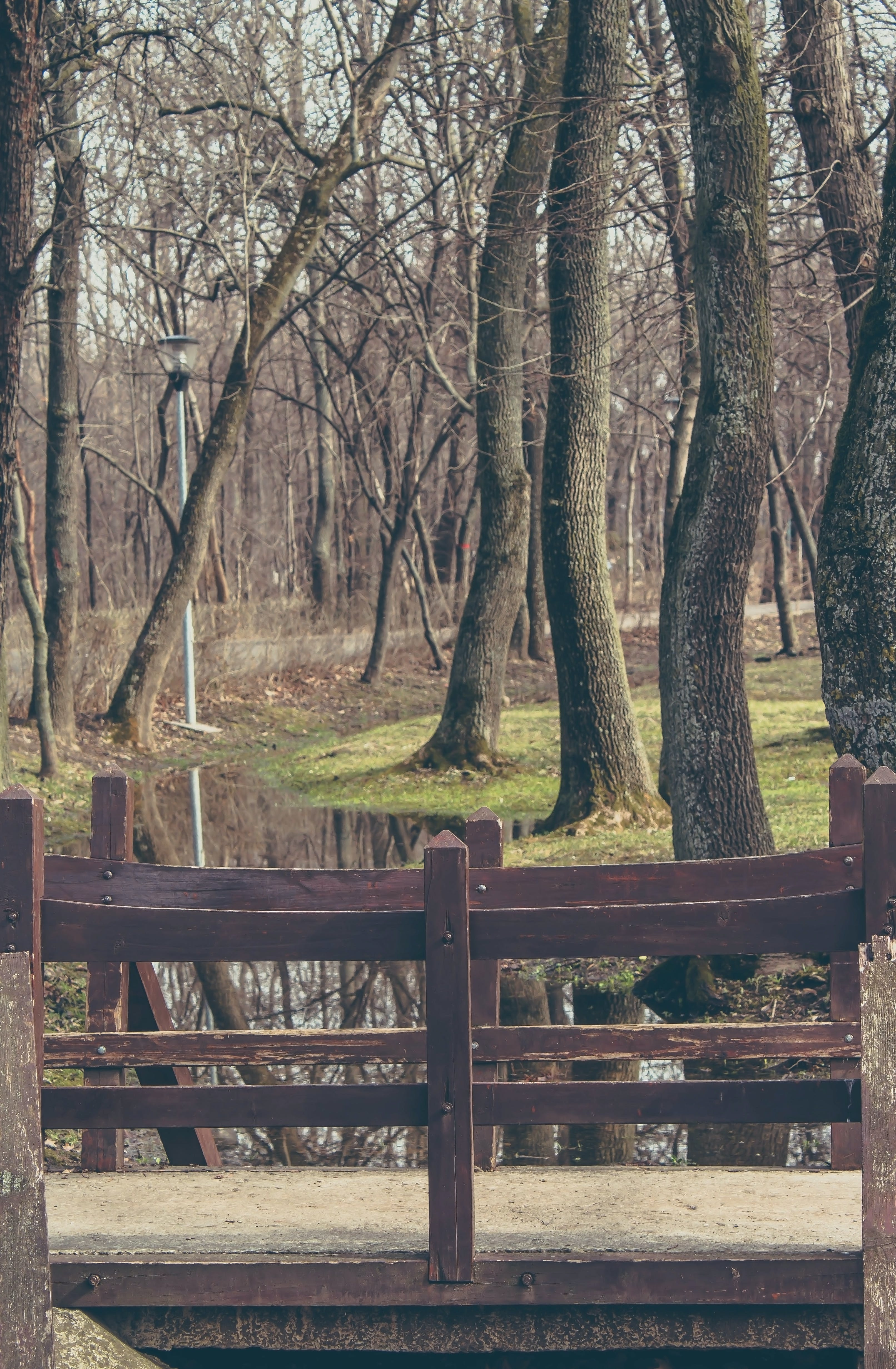 Free stock photo of bridge, curved, faded, forest