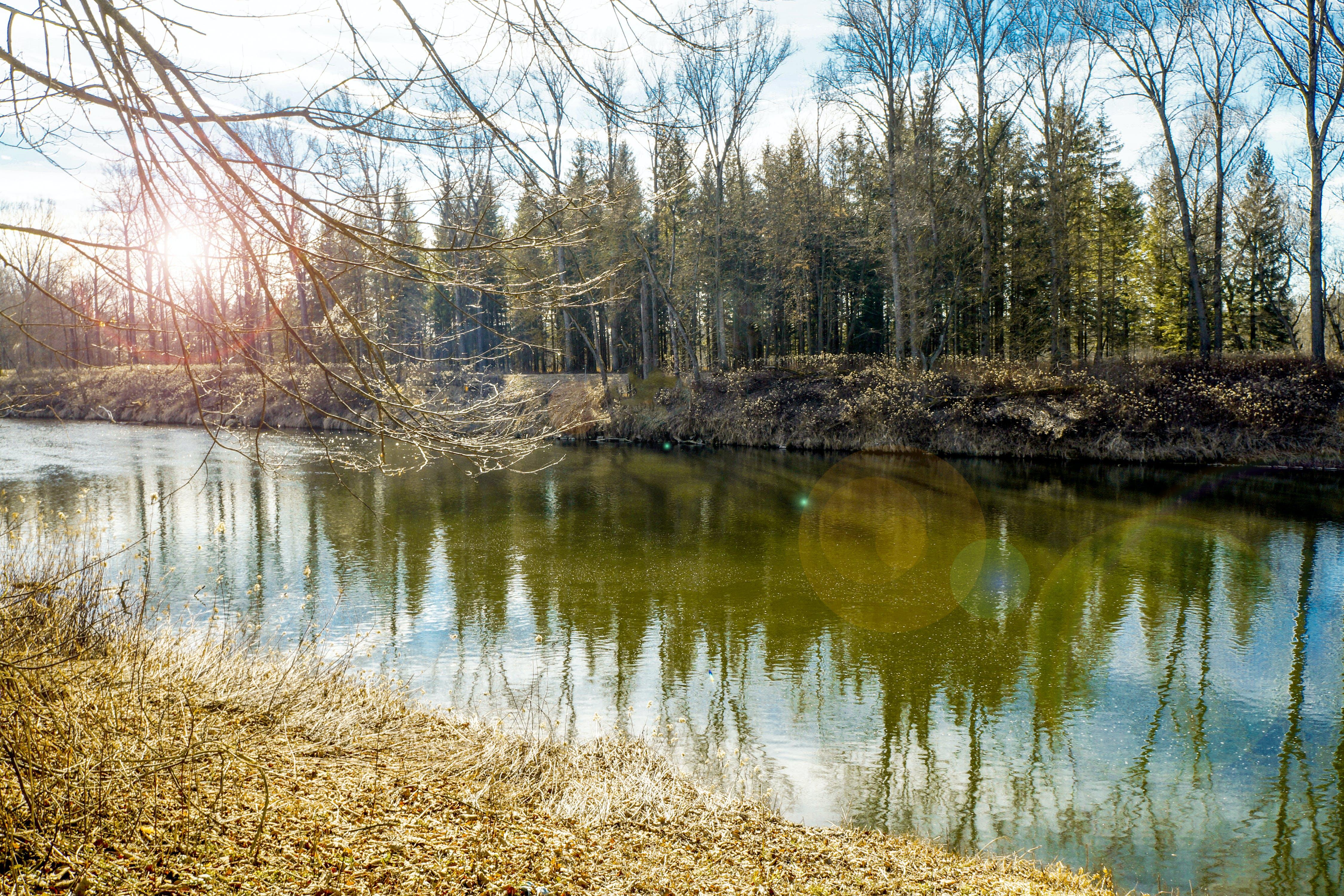 Kostenloses Stock Foto zu frischwasser, natur, wasserfall