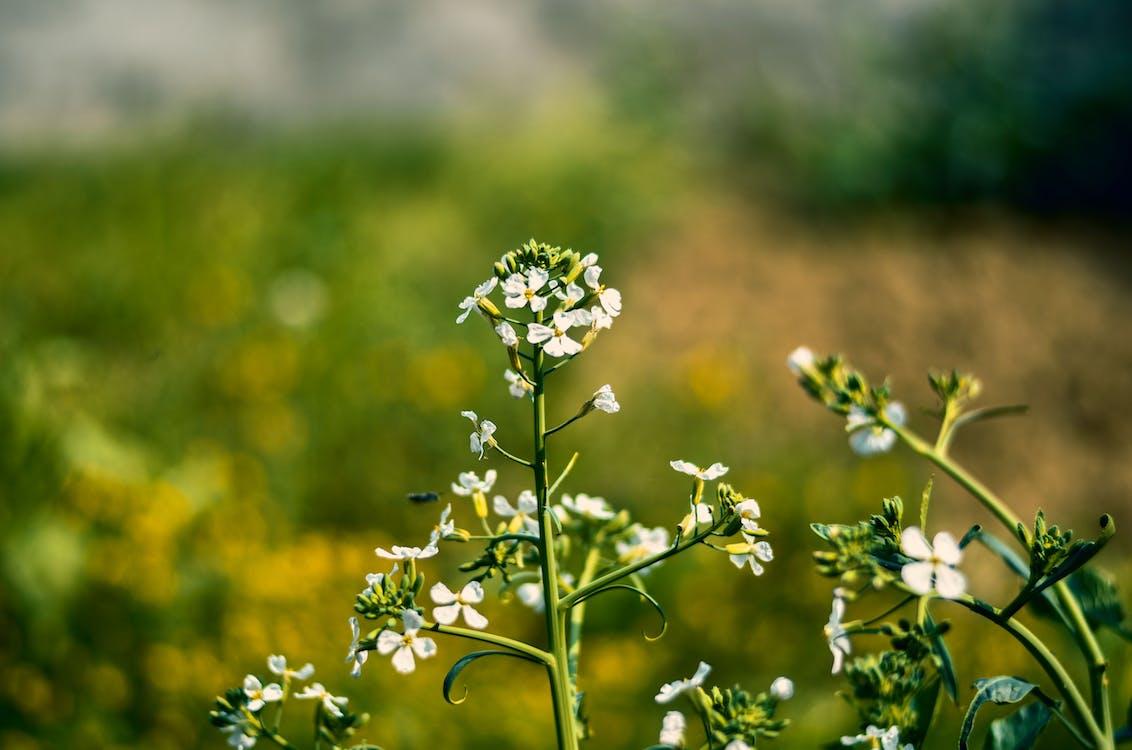 concentrat, floare, flori