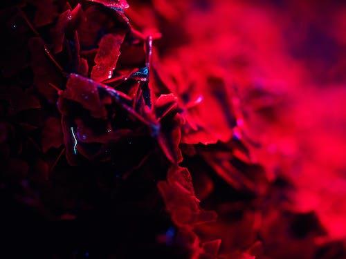Free stock photo of colour, flower, lightning, night