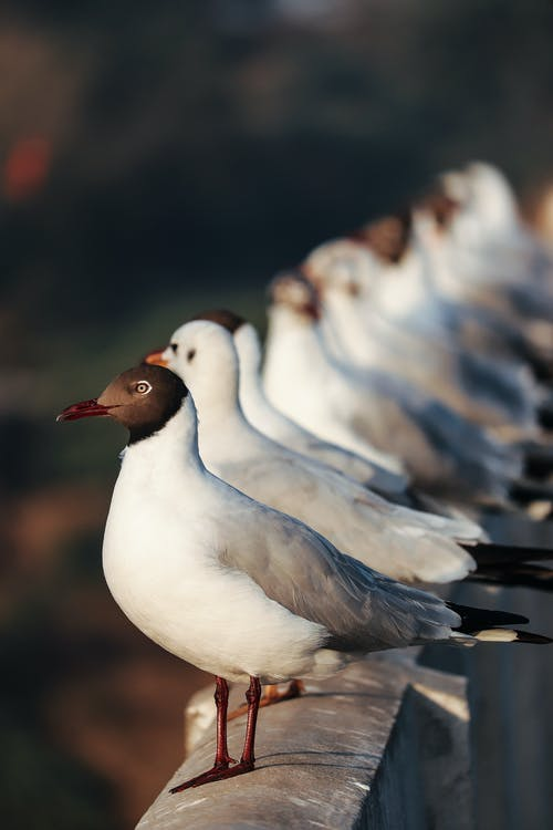 Close Up Photography of Seagulls