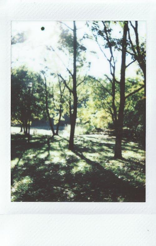 Безкоштовне стокове фото на тему «Polaroid, денний час, дерева, зображення»