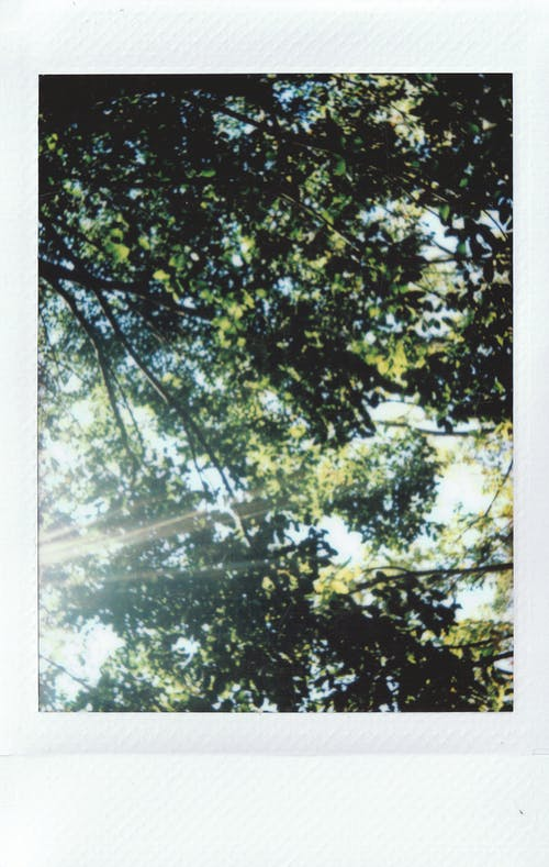 Photo Of Trees During Daytime