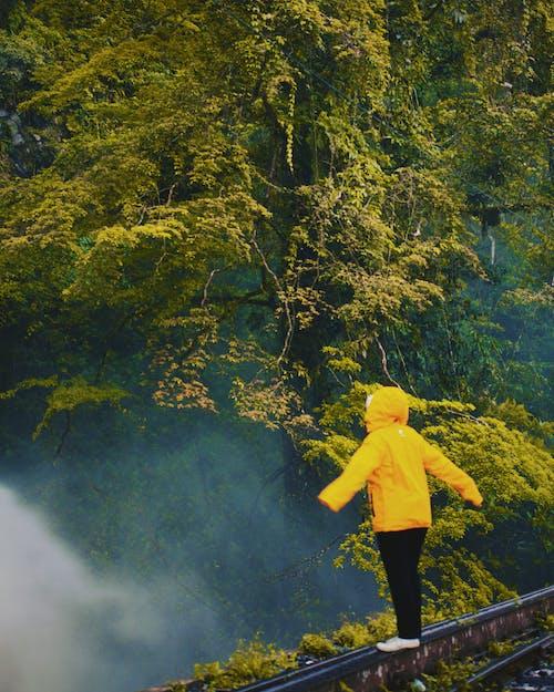 冷, 印尼, 多雲的, 天性 的 免費圖庫相片