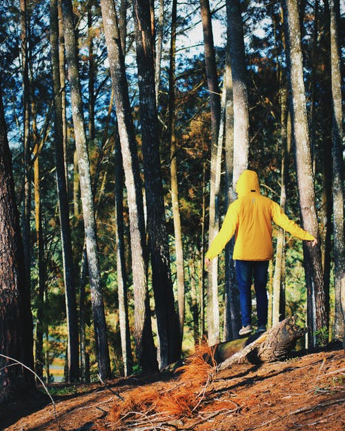 adam, doğa, orman, sarı içeren Ücretsiz stok fotoğraf
