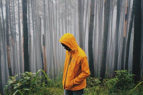 Ingyenes stockfotó álló kép, dzseki, erdő témában