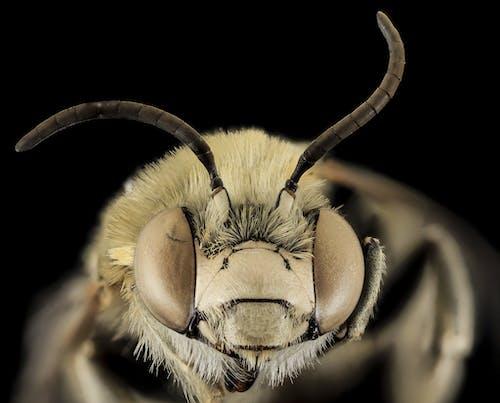 宏觀, 小蟲, 昆蟲, 特寫 的 免費圖庫相片