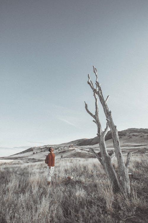 Imagine de stoc gratuită din arbore gol, aventură, aventurier, călător