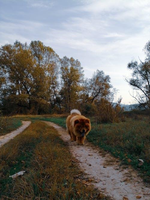 Free stock photo of animal, animal lover, autumn