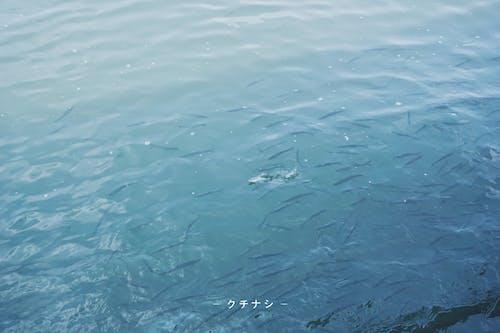 Ảnh lưu trữ miễn phí về cá, màu xanh da trời